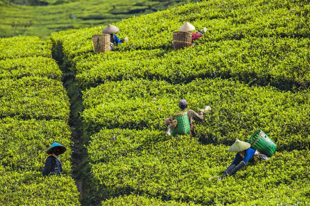 Agro Turizm: Ekoloji ve Turizmin Dost İlişkisi